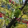 当社梅の木