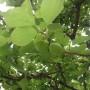 梅の木 Part2